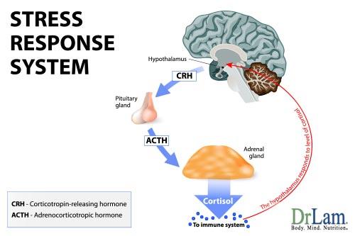stress-model-symptoms-of-stress-15068-1